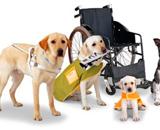 障害者週間記念行事「すみだスマイル・フェスティバル」